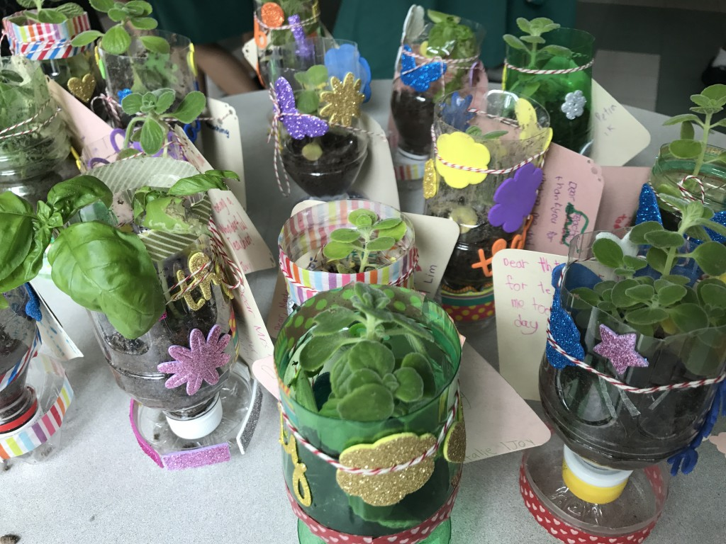 Teachers left with aromatic herbs, planted in recycled plastic bottles